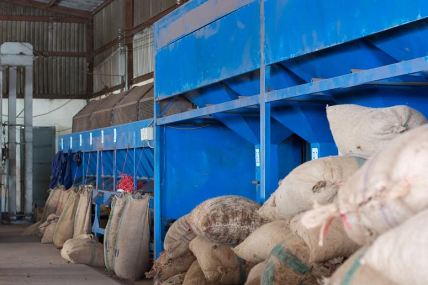 Tri des noix de cajou - http://paysansdavenir.com/plongee-au-coeur-de-la-filiere-noix-de-cajou-de-binh-phuoc-vietnam/