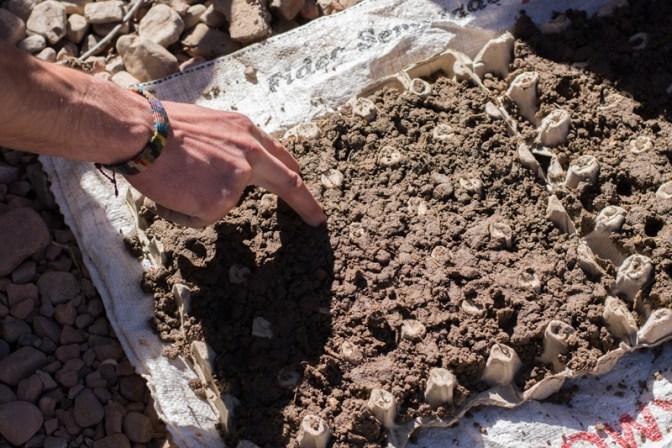 Agriculture urbaine à Sucre - pépinière dans une boite d'œufs : on a mélangé de la terre, du sable, du compost et du fumier, on le met dans la boite d'œufs et on fait des trous - http://paysansdavenir.com/agriculture-urbaine-pourquoi-comment-lexemple-de-la-bolivie/