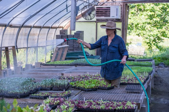 Little Seed Gardens, maraîchage et vente de paniers de légumes : Claudia arrose la pépinière !