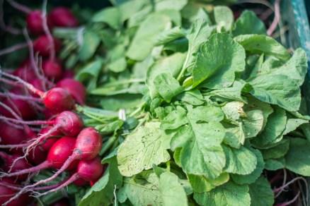 Little Seed Gardens, maraîchage et vente de paniers de légumes : radis