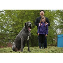 Small Crop Of Heaviest Dog Breed