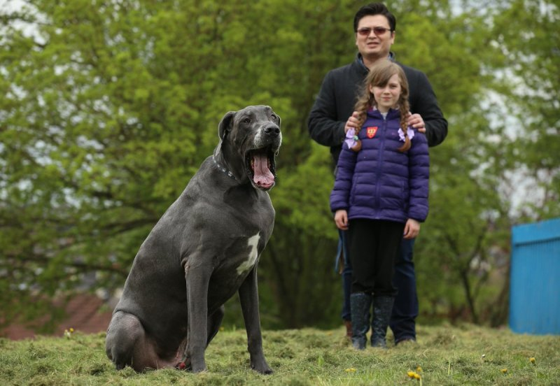 Large Of Heaviest Dog Breed