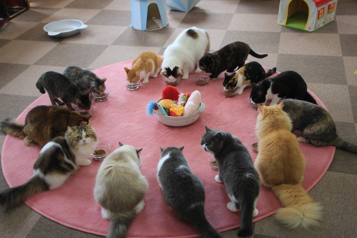 Image result for cat cafe nekorobi restaurant