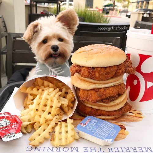 Relaxing Pop Foodie On Instead Instead Spicy Ken Sandwiches Wafflefries At We Got A Triple Stack We Got A K Fil A Waffle Fries Peanut Oil K Fil A Waffle Fries Chips