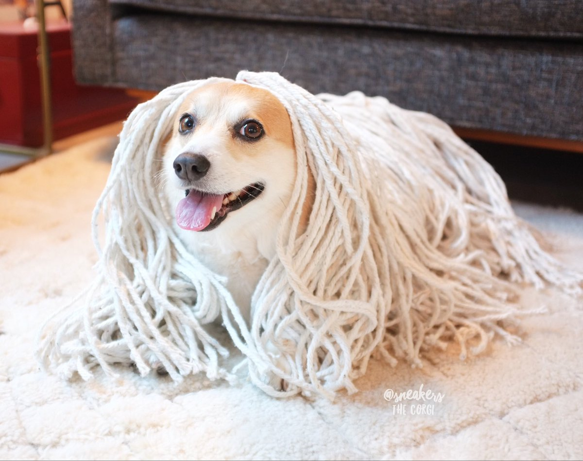 Horrible Here I Amdressed Up As Anor Pet Mean Sneakers Corgi On Honor Sneakers Corgi On Honor Here I Puppy That Looks Like A Mop Big Dog That Looks Like A Mop bark post Dog That Looks Like A Mop