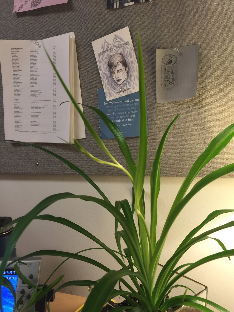 Fascinating Karl Jones On More Spider Plant Babies On Karl Jones On More Spider Plant Babies Spider Plant Babies When To Cut Spider Plant Babies Uk houzz-03 Spider Plant Babies