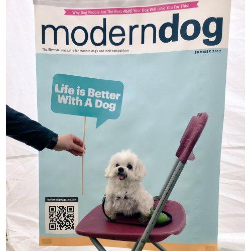 Medium Crop Of Modern Dog Magazine