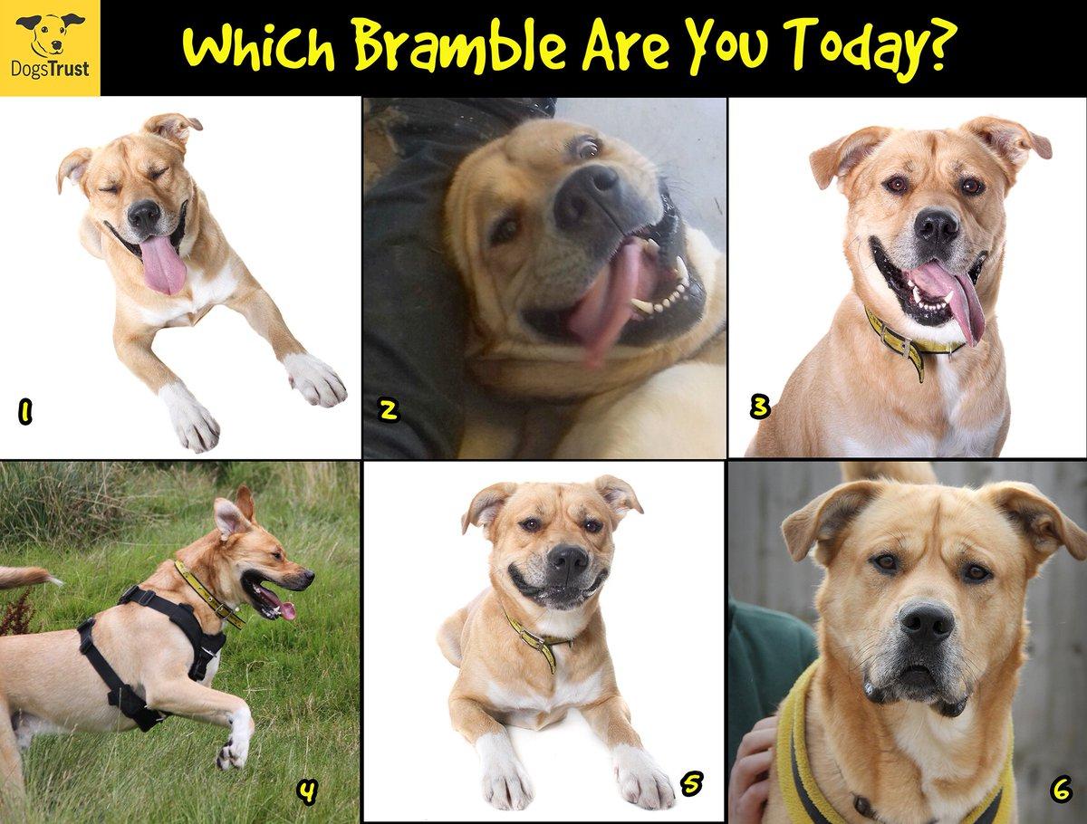 Fullsize Of Funny Dog Faces