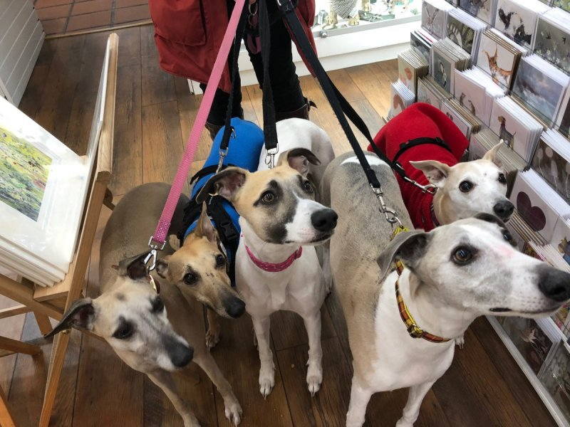 Large Of Breed And Co