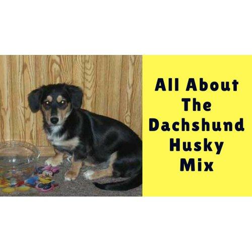Medium Crop Of Dachshund Husky Mix