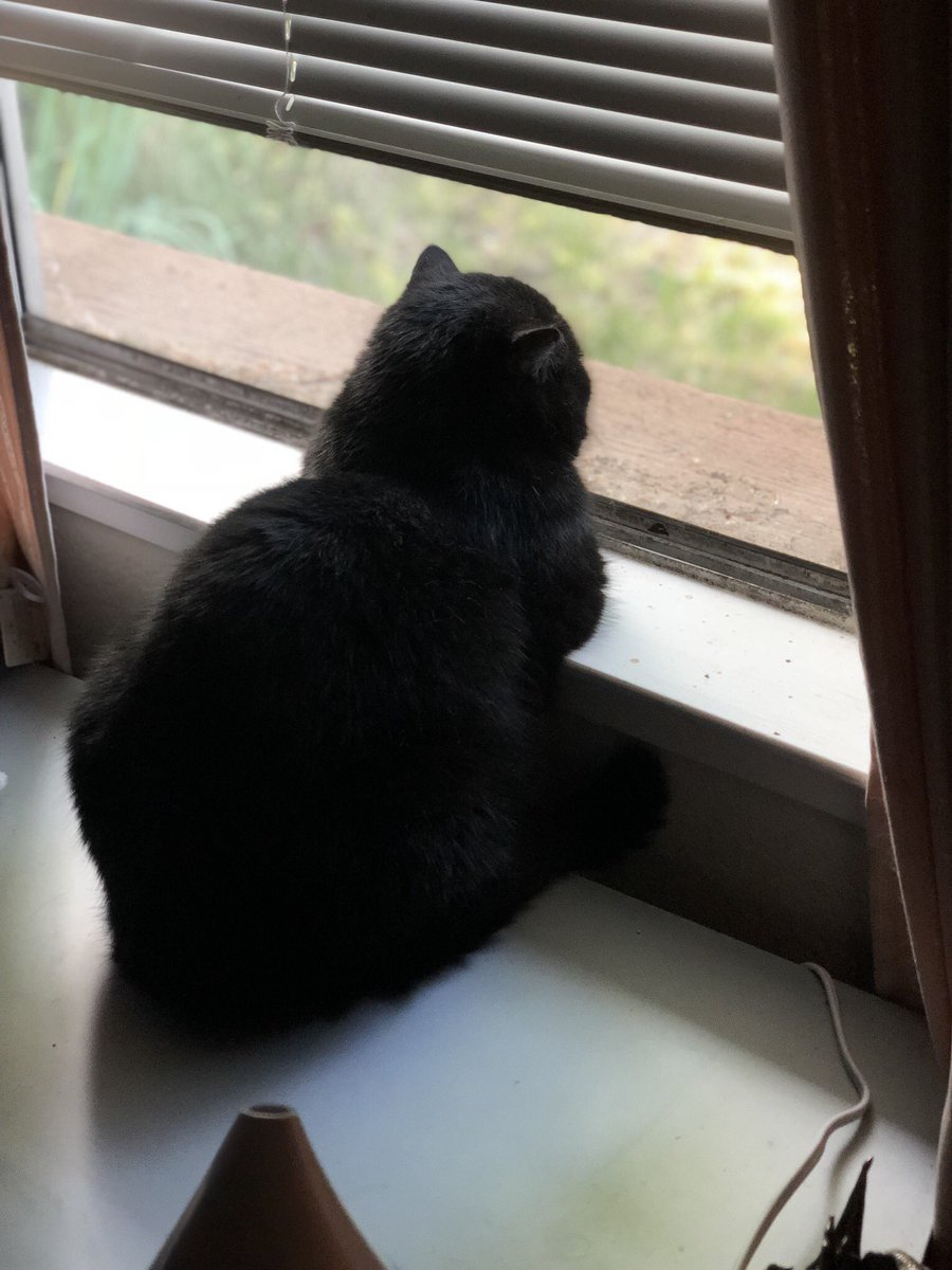 Luxurious Rob Roberts On Will My Husband Return From When Will My Husband Return From War Know Your Meme When Will My Husband Return From War Reddit bark post When Will My Husband Return From War