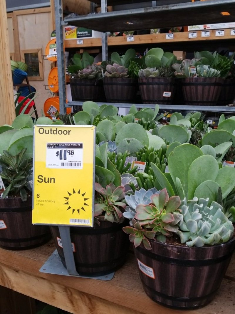 Large Of Succulents Home Depot