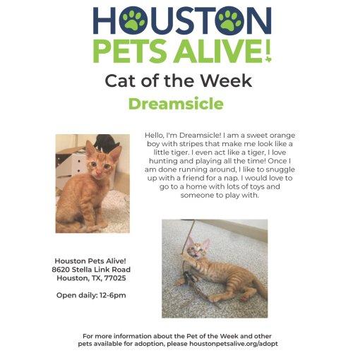 Medium Crop Of Houston Pets Alive