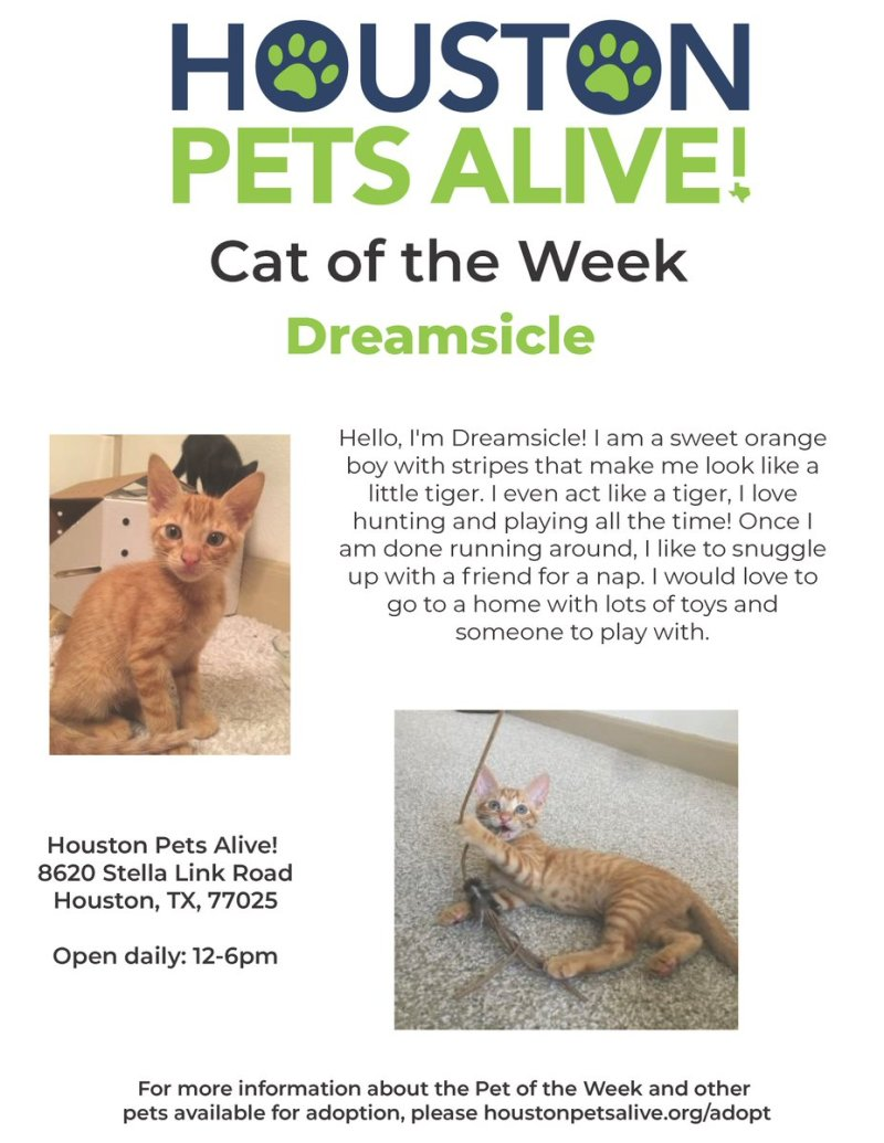 Large Of Houston Pets Alive