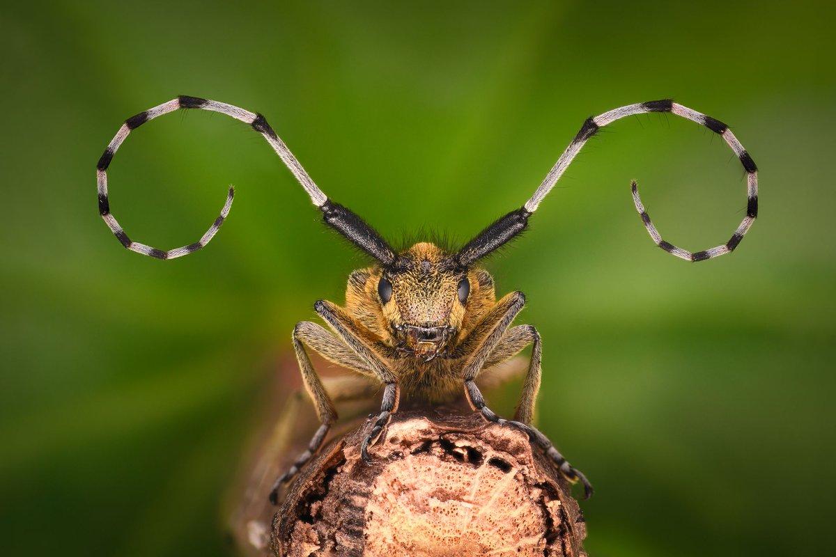 Fullsize Of Sage Pest Control