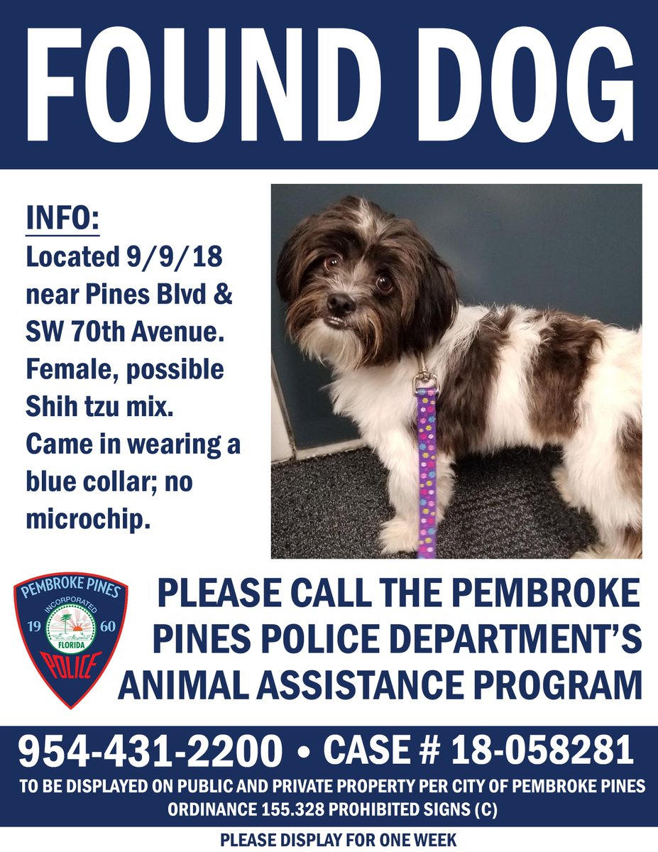Decent Pembroke Pines Pd On You Recognize Se Two Lost Dogs Thatwere Found Over Weekend A Female One A Female Shih Tzu Pembroke Pines Pd On You Recognize Se Two Lost Dogs bark post Bulldog Shih Tzu Mix