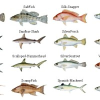different type of fish in name negeri