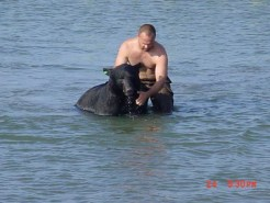Black-Bear-rescue-06