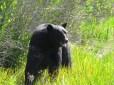 Black-Bear-rescue-13