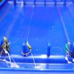 Bas de ligne et pêche au feeder