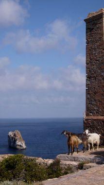 Goats at Laveria