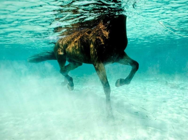 Kurt Arrigo : Seahorse