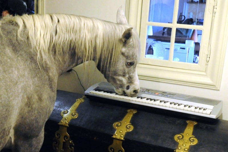 www.pegasebuzz.com | Nasar, the horse who lives inside a house