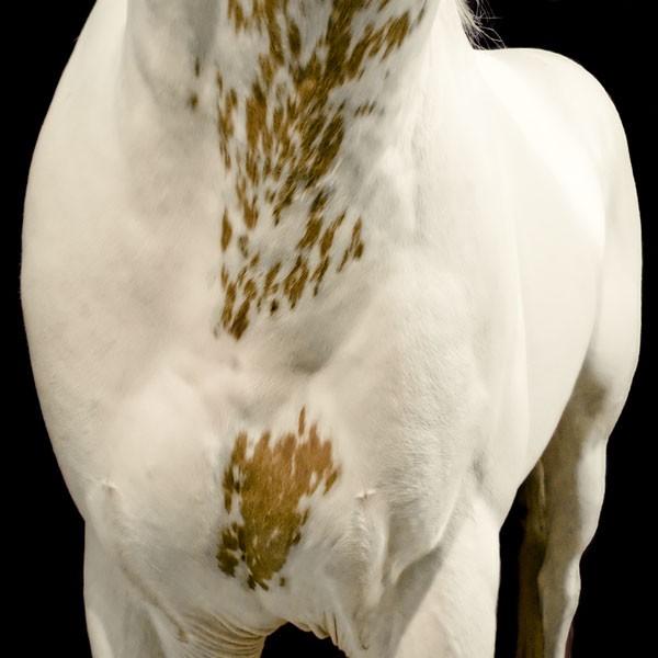 www.pegasebuzz.com | Equestrian photography : Ray Hartl