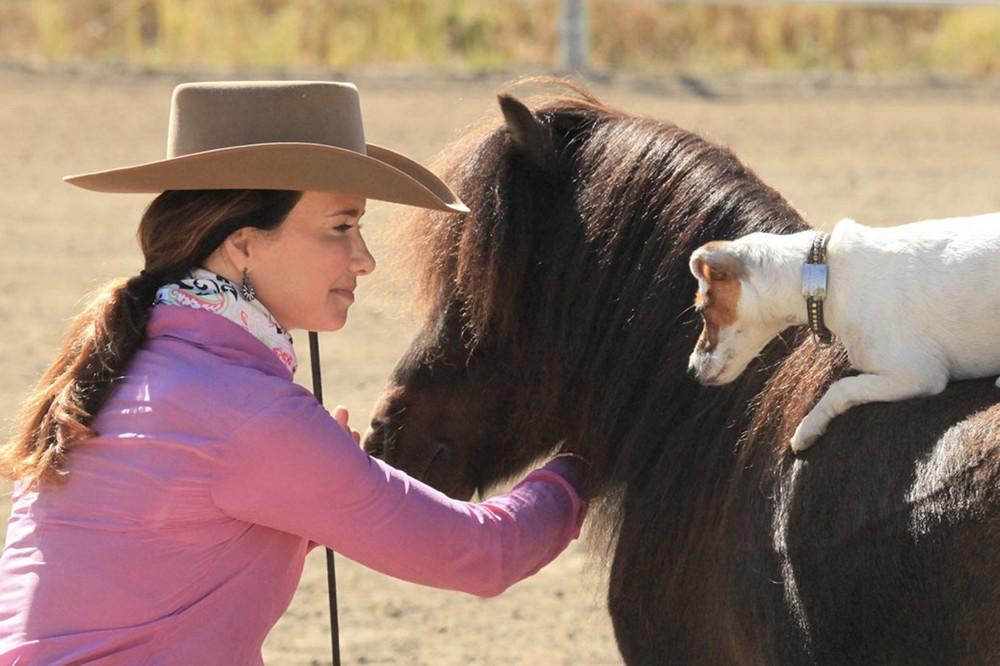 www.pegasebuzz.com | Jack Russell Dally Rides Miniature Horse Spanky thanks to Francesca Carson.