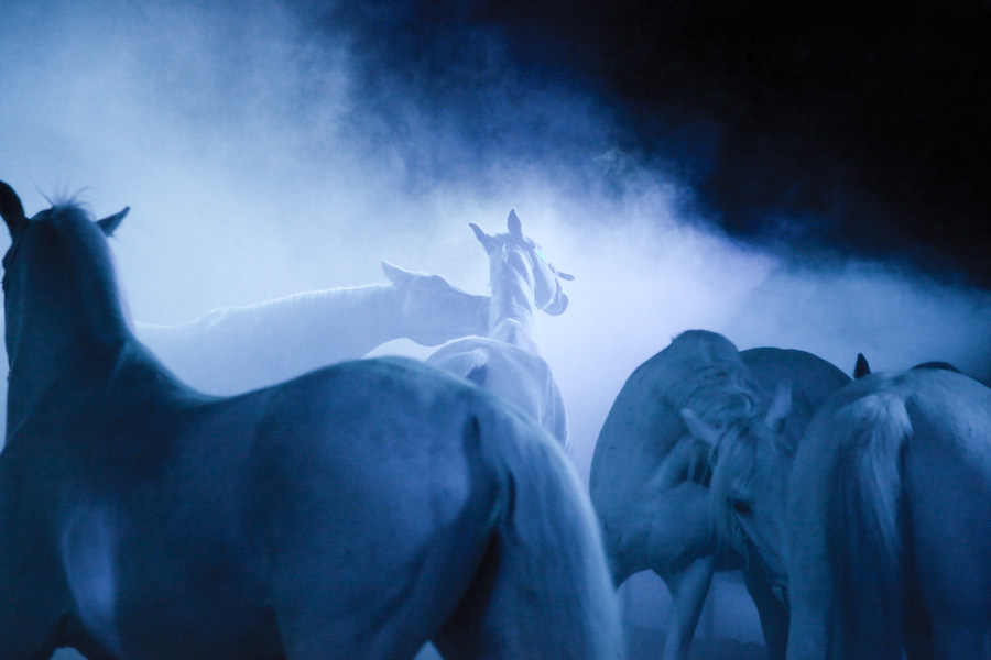 www.pegasebuzz.com | Equestrian photography : Ilja Holodkov