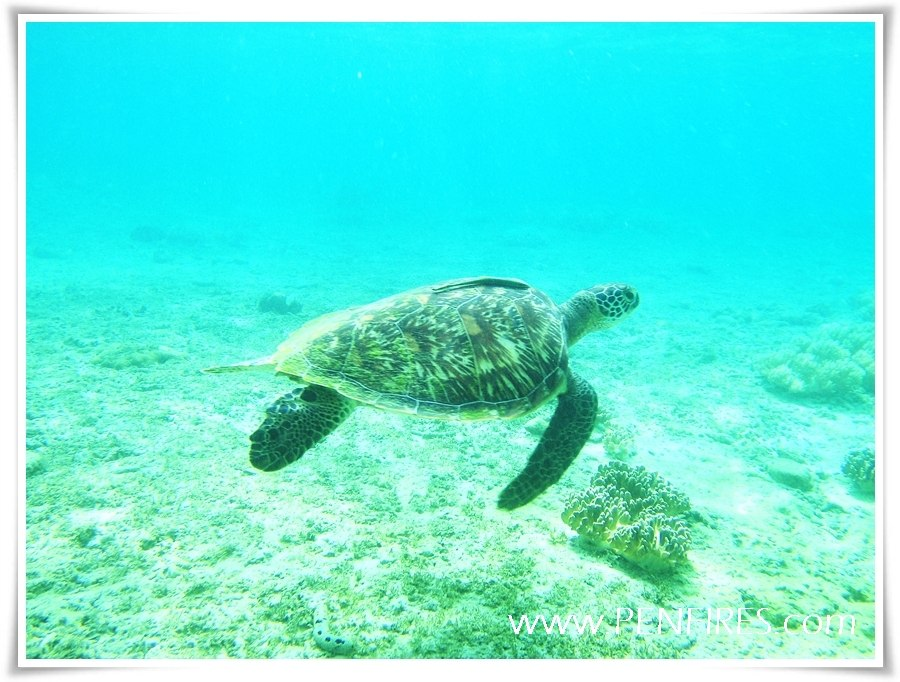Travel to Apo Island, Negros Oriental: Snorkel and Diving Paradise