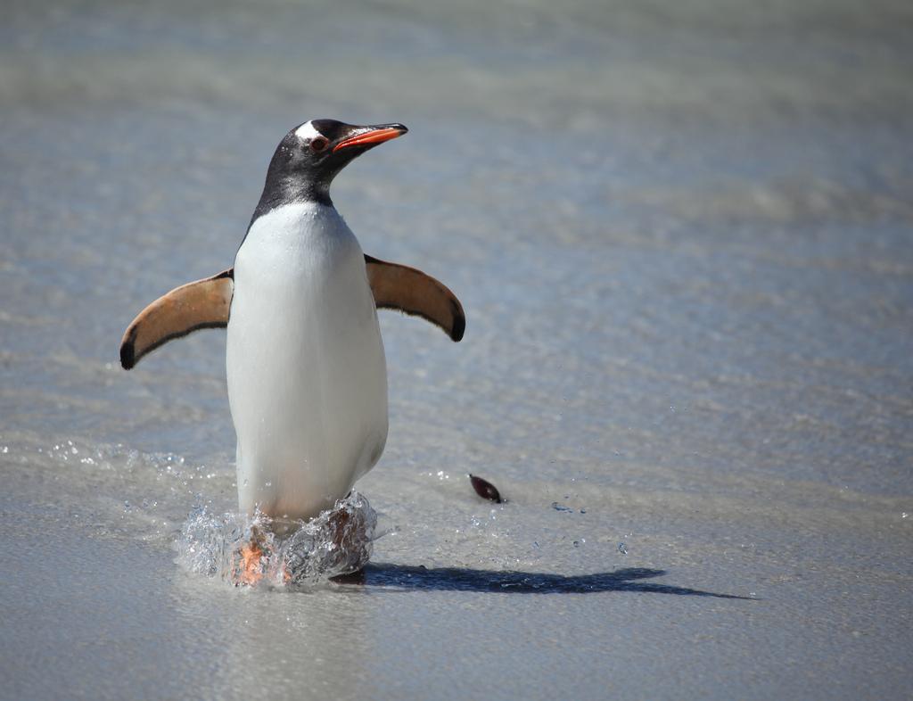 ペンギンの画像 p1_14