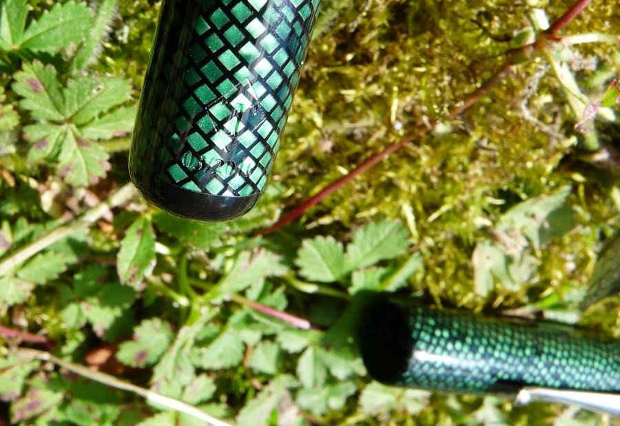 Twiss Green Lizard logo