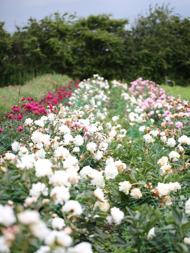 The-Green-and-Gorgeous-Flower-Farm