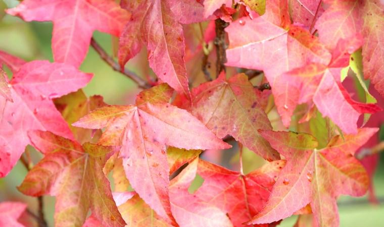 October-Musings