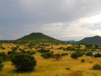 Upland_South_Africa_Savanna