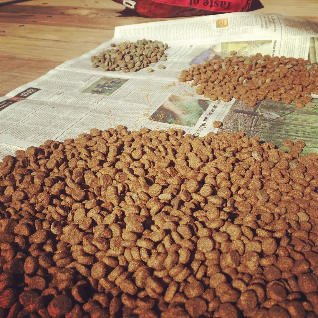 Glamorous Boating Task Number 512: sorting the moldy dogfood from the good