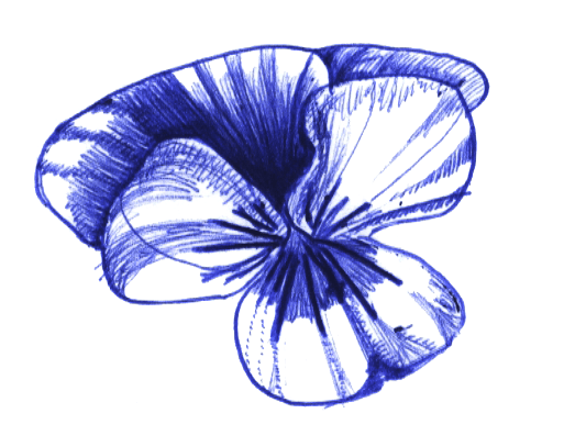 pansy flower drawing PWP