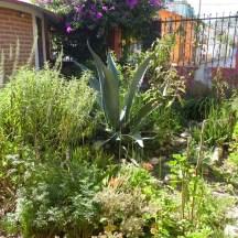 Die Kräuter aus dem hauseigenen Garten werden von den Hebammen zu Heilmitteln verarbeitet.