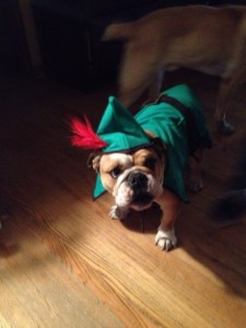 vinnie bulldog elf