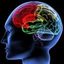 Què fa l'MDMA al teu cervell ?