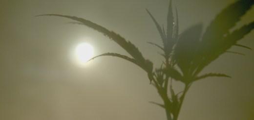 marihuana catalunya