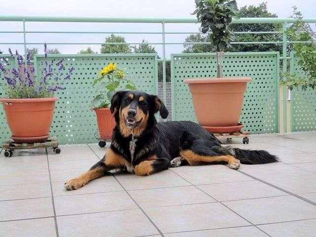 Cómo adecuar el balcón para tu perro