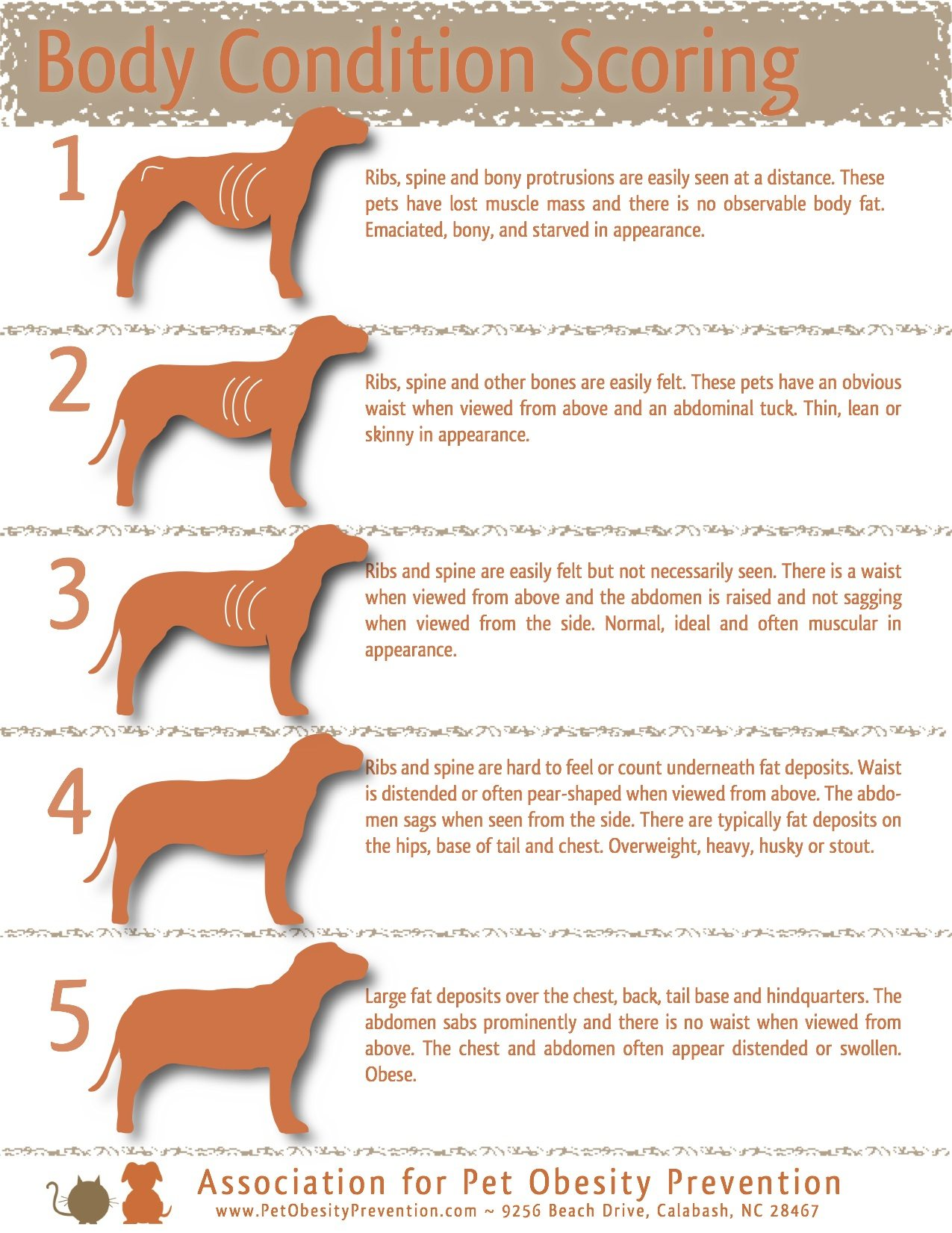 Fullsize Of How To Put Weight On A Dog