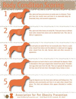 Small Of How To Put Weight On A Dog