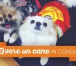 avere un cane in korea