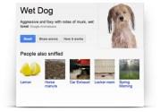 """""""جوجل نوز"""" خدمة خيالية جديدة تمكنك من شمّ روائح معينة عبر المتصفح !"""
