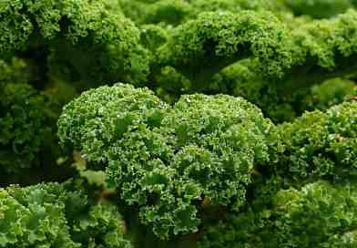 Is Kale Really Good for You?