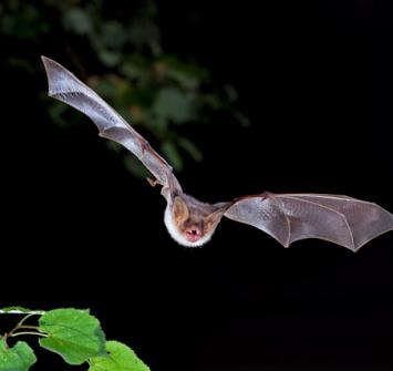 Controle Morcegos