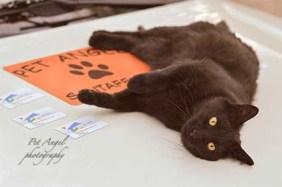 Black Cat on Pet Angel Santa Fe Car